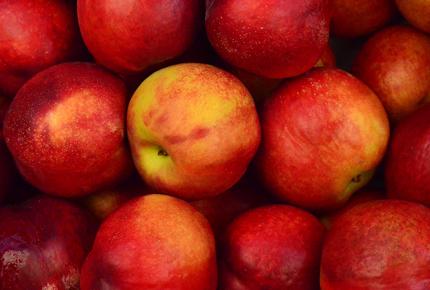 Ottawa County Oak Harbor Ohio Apple Festival apple image