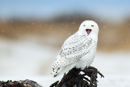 Winter birding at Lake Erie's Shores and Islands Ohio